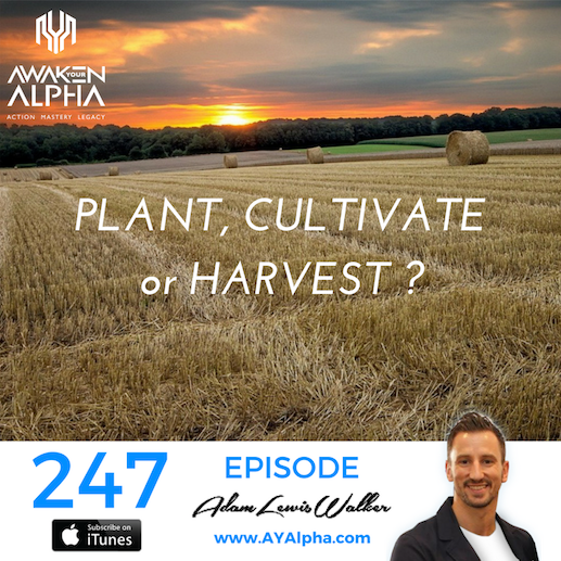247# Plant, Cultivate or Harvest?